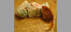Impatient Kitty